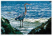 251 - Great Blue Heron - Aschreiher