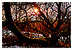2577 - Burning tree - -
