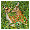 3858 - Deer Friend - -