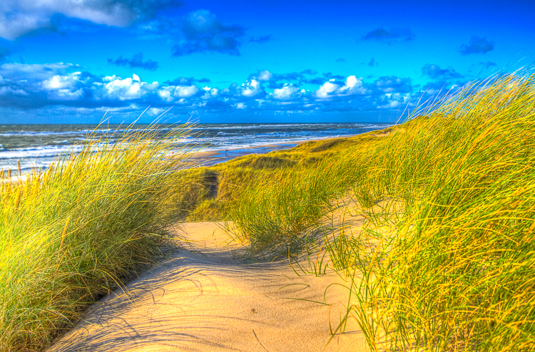 4025 - Late summer North Sea dunes - -