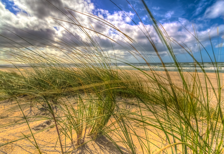 4039 - Beachgrass Left - Strandhafer Links