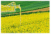 648 - Oilseed Rape Planting - -