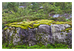 6711 - Bed of Moss - -