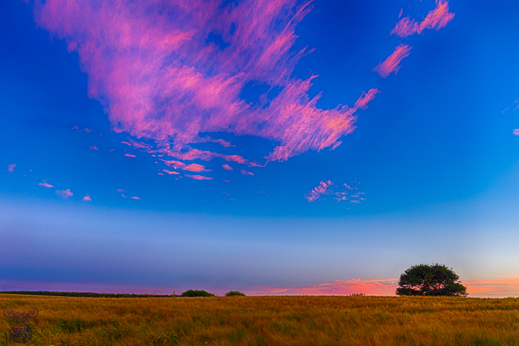 8477 - Tree Field Sunset - -