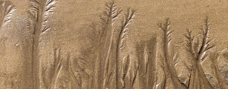 8766 - Sand water trees - -