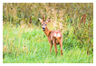 9309 - Swedish deer encounter - -