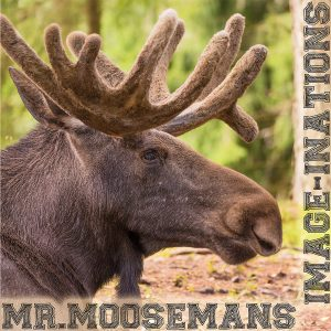 Mr.Mooseman's Image-inatioans