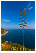 6040 - Outstanding Agave - -