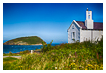8597 - Puffin Island View - -