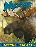 Moose - backyard animals